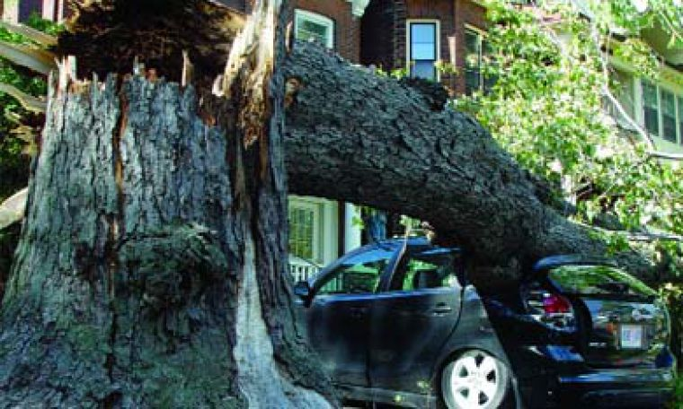 High winds on Wednesday night caused a tree to fall on a car near the Grad Club on Barrie Street. Homes throughout the Ghetto lost power as a result of the storm.