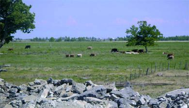 """The """"flat"""" and """"exposed"""" terrain of Wolfe Island was deemed perfect for a wind farm."""