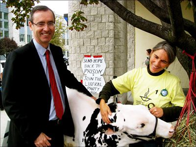 Professor Bill Flanagan with Hope, the calf sold at auction.