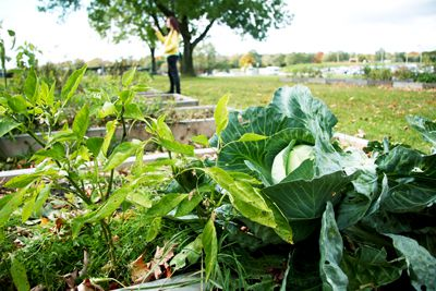 Community garden plots are among the initiatives started by the Living Cities company.