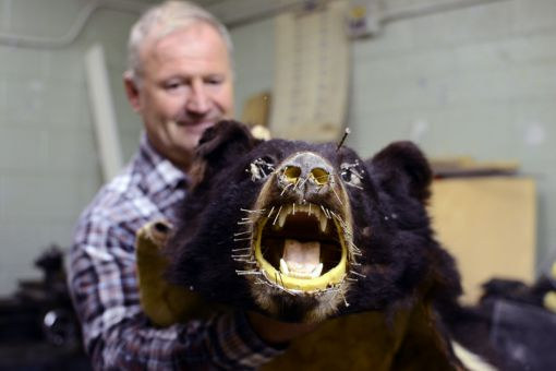 Tice Post, biology department technician, does about 12 taxidermy works each year. While some become full-body models, others, like the bear above, are made into rugs.