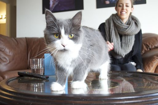 Ginny, the cat, hops up on the table for the photoshoot with her owner Tova Latowsky.