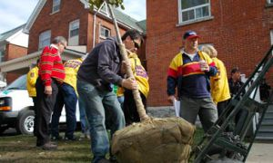 Students, alumni and community members plant trees on Aberdeen Street.