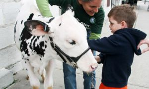 Hope the cow, symbolic of the fight to save prison farms, was brought in front of City Hall.