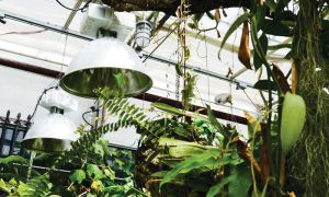 Kingston Police gives high-powered light bulbs confiscated in grow-operation busts to the greenhouse.